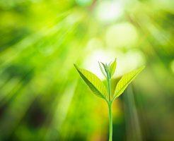 希望の光:肝臓がん末期闘病記